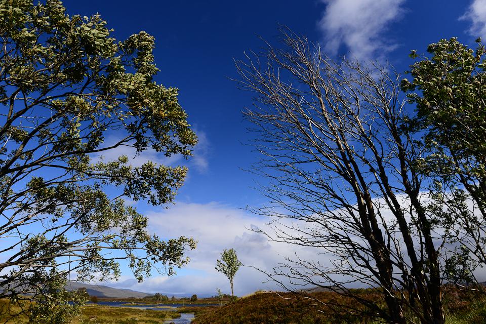Fine Art Scotland-2